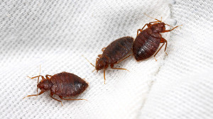 Insect and Bed Bug Removal